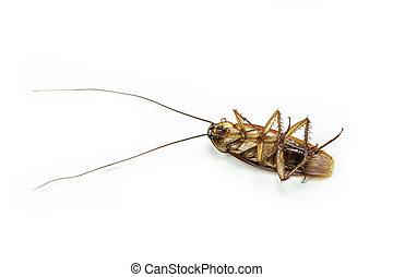 isoleren, op, dood, achtergrond., kakkerlak, afsluiten, witte