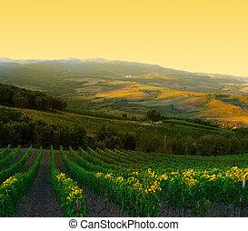 italië, rijp, paarse , tuscany, wijngaard, druiven, zonopkomst