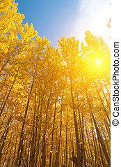jaargetijden, esp, bomen, herfst