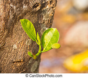 jackfruit, boompje, jonge