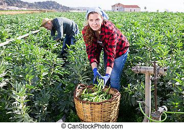 jonge, bonen, vrouw, dag, lente, oogst, oogst