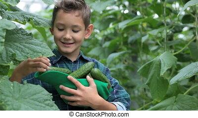 jongen, komkommers