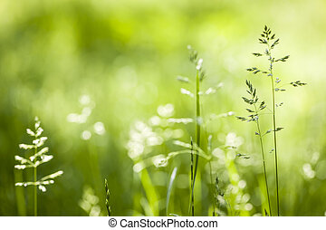 juni, bloeiend, gras, groene