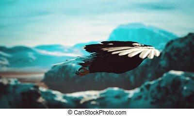 kaal, amerikaan, op, vertragen, bergen, adelaar, vlucht, motie, alaskan