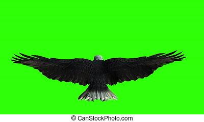 kale adelaar, groene, vliegen, screen.