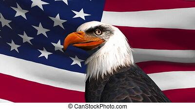 kale adelaar, usa, flag., close-up, achtergrond