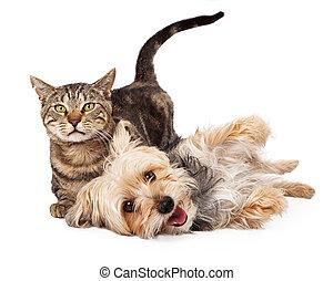 kat, speels, samen, het leggen, dog