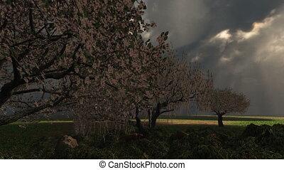 kers, lente, bomen, bliksemonweer, (1018)