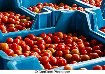 kers tomaten