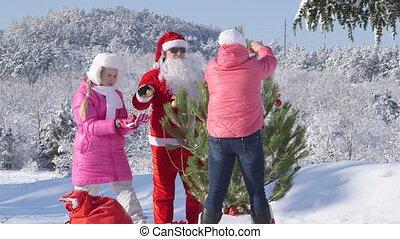 kerstboom, bos, winter