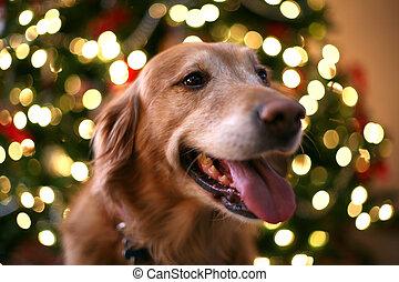 kerstmis, dog