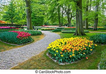keukenhof, tulpen, lisse, park, kleurrijke, holland