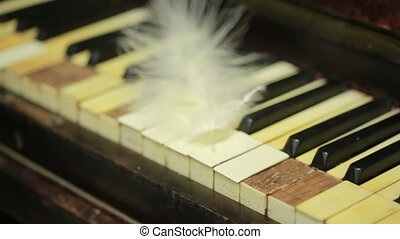 keyboard., oud, veer, piano, closeup