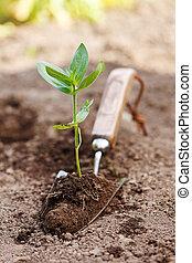 kleine, aarde, plant, spade