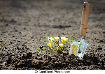 kleine, akker, bloem, potting