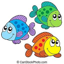 kleur, schattig, vissen