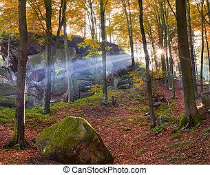 kleurrijke, bos, herfst, morgen
