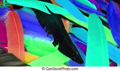 kleurrijke, neon, uv, veertjes, veer, vogel