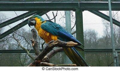 kleurrijke, papegaai