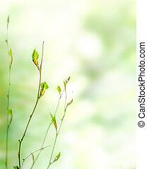 knoppen, lente, groene achtergrond, natuur