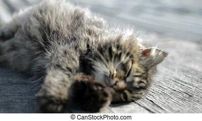 koesteren zich, grijze kat, zon
