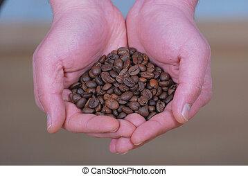 koffie bonen, hand