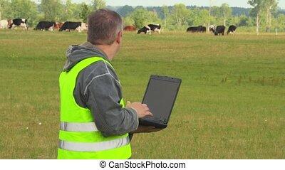 koien, draagbare computer, weide, farmer