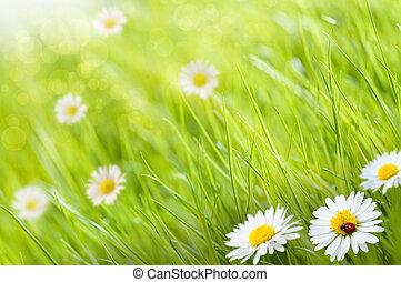 kopie, madeliefjes, lieveheersbeestje, ruimte, dit, zonnig, beeld, gras, -, een, achtergrond, links, bloemen, dag, blurry, bovenkant