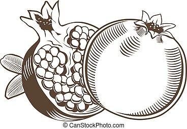 kunst, ouderwetse , illustratie, vector, lijn, granaatappels, style.