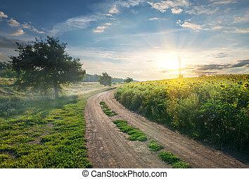 land, zonnebloemen, straat