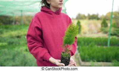 landbouw, vasthouden, thuja, alhier, vrouw, hands., botany., haar, groene, natuur, wetenschapper, liefde, jonge, environment., zakelijk, kiemplant