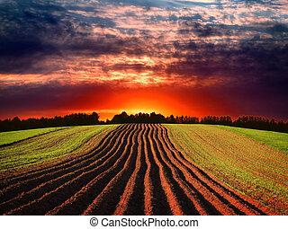 landelijk, ondergaande zon , landscape