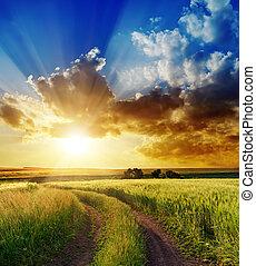 landelijk, op, goed, ondergaande zon , straat