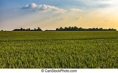 landscape, akker