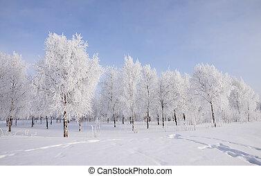 landscape, bomen, sneeuw, winter, bedekt