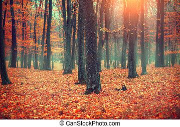 landscape, leaves., bomen, scène, herfst, herfst