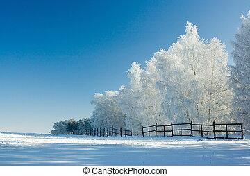landscape, winter bomen