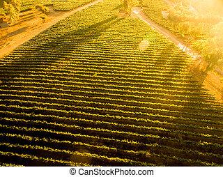 landschap., op, luchtopnames, ondergaande zon , chileen, aanzicht, vineyard.