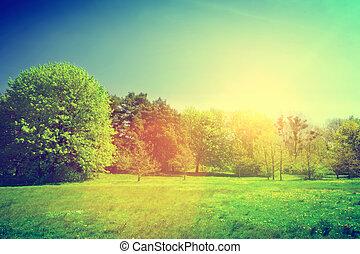 landschap., zomer, zonnig, groene, ouderwetse