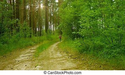 langs, vrolijke , zonnig, straat, zomer, rennende , bos, dennenboom, geitje