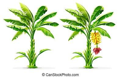 leaves., bomen, tropische , palm, vector., vruchten, banaan