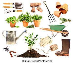 lente, aanplant, witte , voorwerpen, variëteit