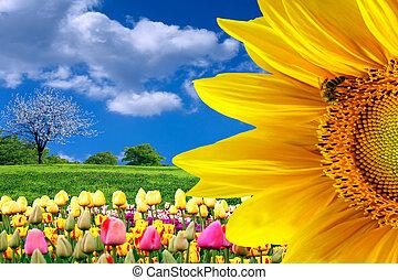 lente, beauty, natuur