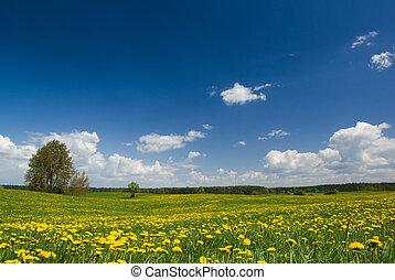 lente, landschap.