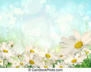 lente, madeliefjes, achtergrond