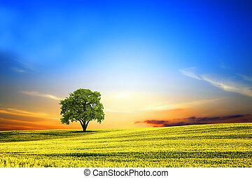 lente, ondergaande zon , landscape