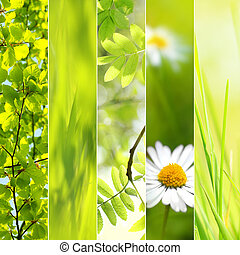 lente, seizoenen, collage