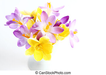 lente, witte bloemen, achtergrond
