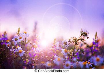 lentebloemen, akker