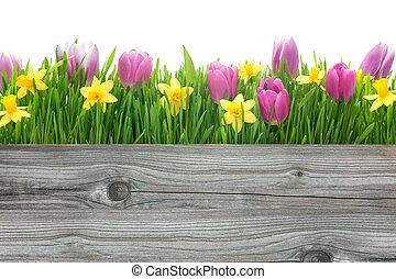 lentebloemen, daffodils, tulpen